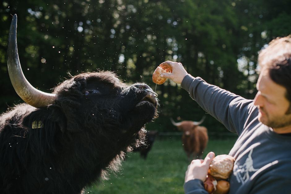 dokumentarische familienfotografie marburg mit hochlandrindern