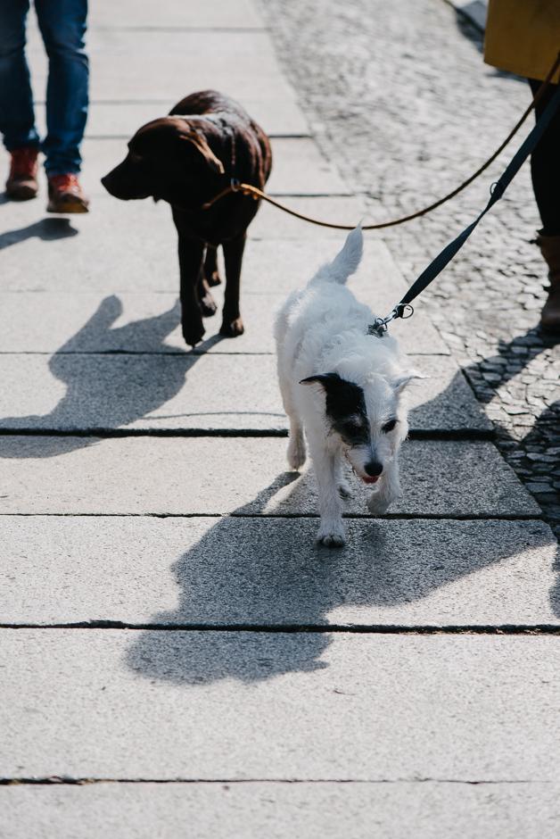 familienfotografie mit hunden leipzig