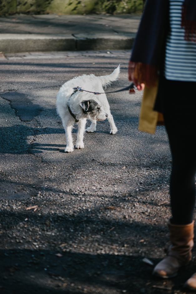 familienfotos mit hund leipzig