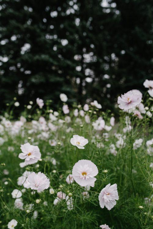 slow flowers leipzig